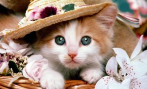 Wallpaper-kucing-9